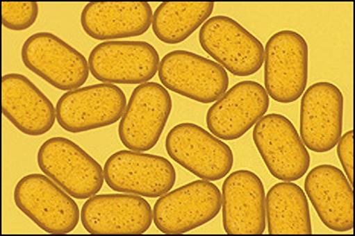 Complex Fluids and Nanomaterials Group