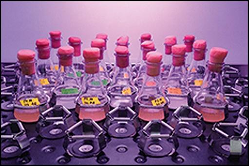 Metabolic Engineering Laboratory